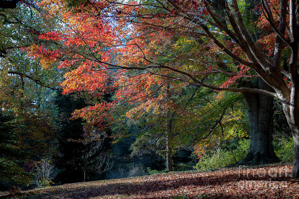 Photograph - Autumn In The South by Dale Powell
