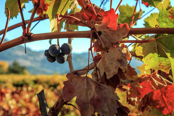 Wall Art - Photograph - Autumn In The Wine Country by James Eddy