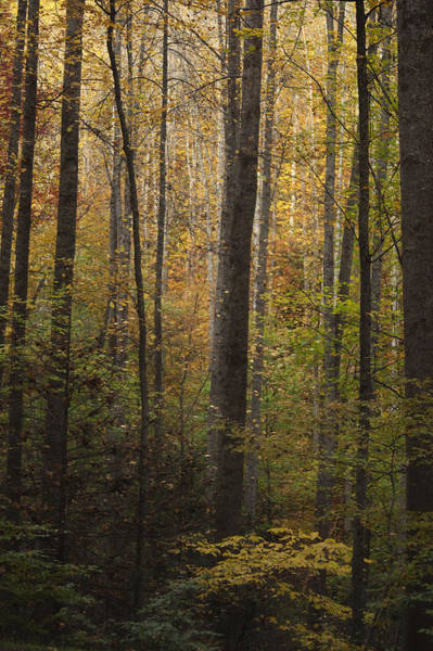 Great Falls Photograph - Autumn In The Woods by Andrew Soundarajan