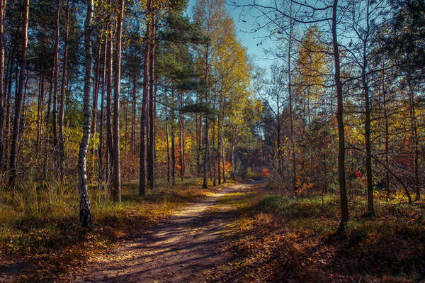 Photograph - Autumn In The Woods by Dmytro Korol