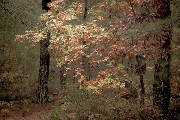 Wall Art - Photograph - Autumn In The Woods by Sharon Mayhak