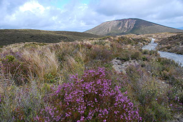Photograph - Autumn In Tongariro National Park by Cascade Colors