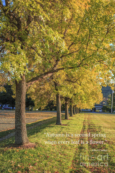 Photograph - Autumn Is The Second Sprint by Edward Fielding