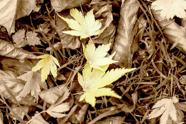 Photograph - Autumn Isolated Gold Leaves On The Ground by Jacek Wojnarowski