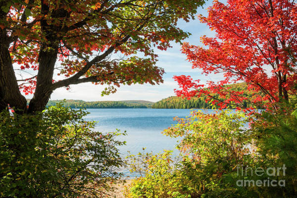 Algonquin Photograph - Autumn Lake by Elena Elisseeva