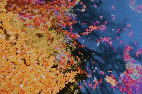 Photograph - Autumn Lake Pallette by Tom Singleton