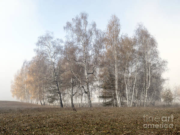 Photograph - Autumn Landscape In A Birch Forest With Fog by Odon Czintos