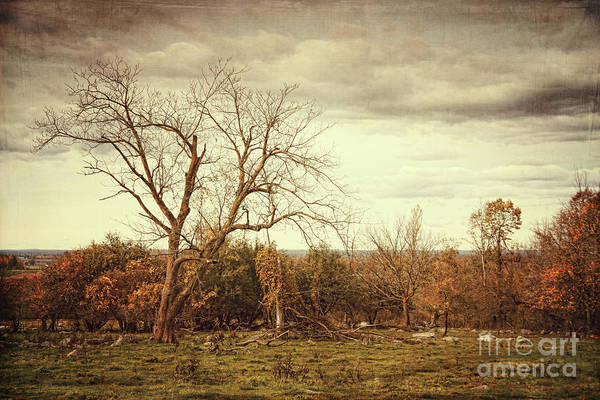 Wall Art - Photograph - Autumn Landscape In Late November by Sandra Cunningham