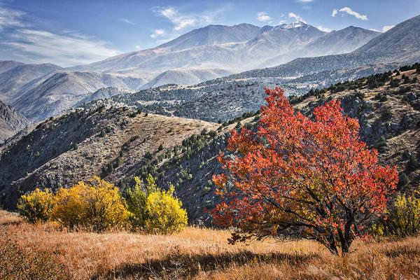 Wall Art - Photograph - Autumn Landscape  by Rabiri Us