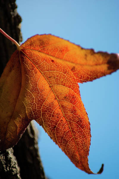 Wall Art - Photograph - Fall Leaves 5 by Kevin O'Hare