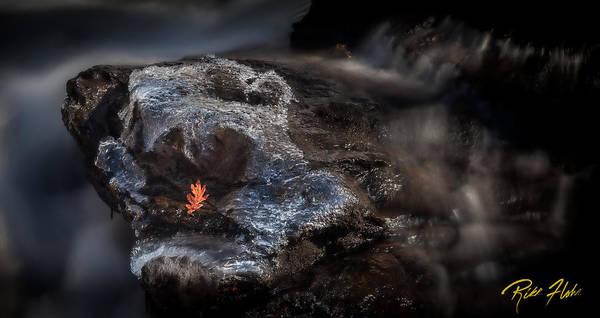 Photograph - Autumn Leaf Amicalola Falls  by Rikk Flohr