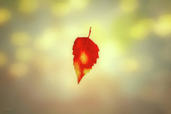 Photograph - Autumn Leaf by Bob Orsillo