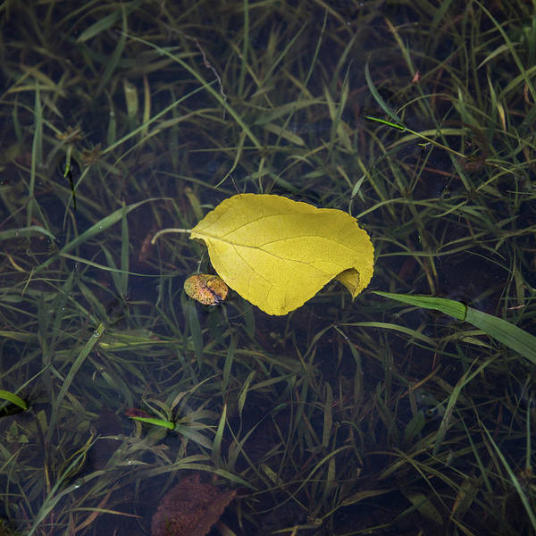 Photograph - Autumn Leaf Floats Above The Crowd by Gary Slawsky
