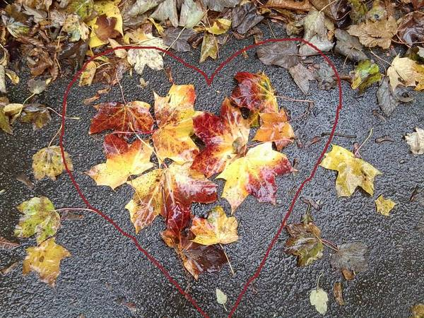 Photograph - Autumn Leaf Photo 815 With Heart Drawn In by Julia Woodman