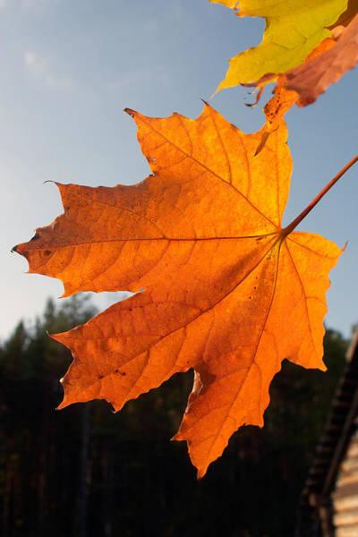 Wall Art - Photograph - Autumn Leaf by Stanislovas Kairys