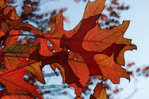 Photograph - Autumn Leaves 10 by Jean Bernard Roussilhe