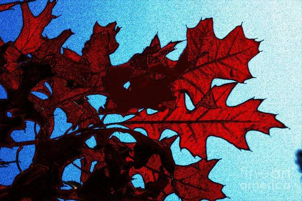 Photograph - Autumn Leaves 11 by Jean Bernard Roussilhe