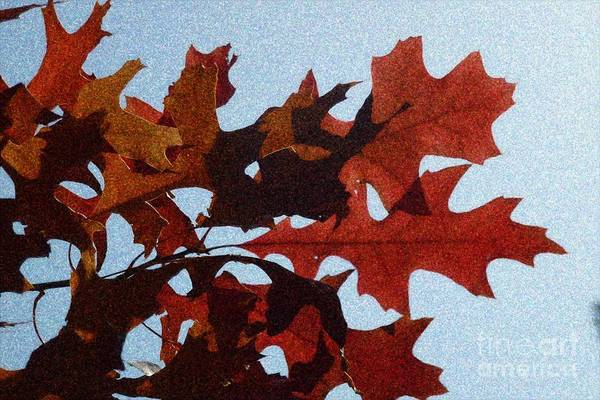 Photograph - Autumn Leaves 12 by Jean Bernard Roussilhe