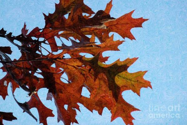 Photograph - Autumn Leaves 15 by Jean Bernard Roussilhe