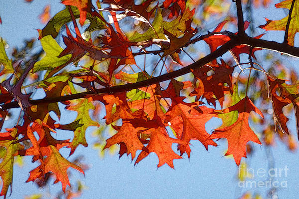 Photograph - Autumn Leaves 16 by Jean Bernard Roussilhe