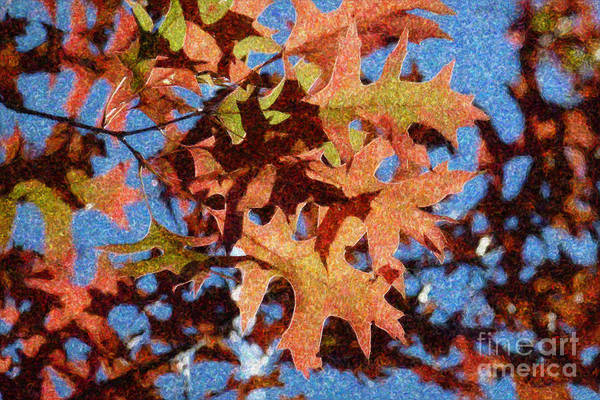 Photograph - Autumn Leaves 17 - Variation  1 by Jean Bernard Roussilhe