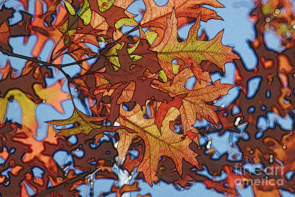 Photograph - Autumn Leaves 17 - Variation  2 by Jean Bernard Roussilhe