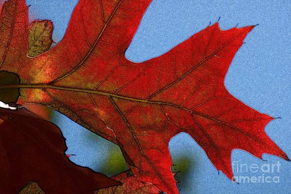 Photograph - Autumn Leaves 18 by Jean Bernard Roussilhe