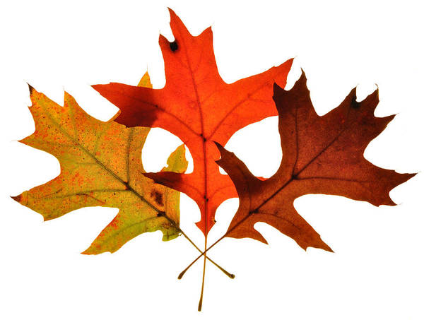 Photograph - Autumn Leaves 2 by Mark Fuller