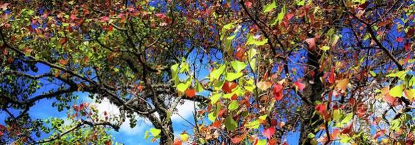 Photograph - Autumn Leaves 243 L by D Davila