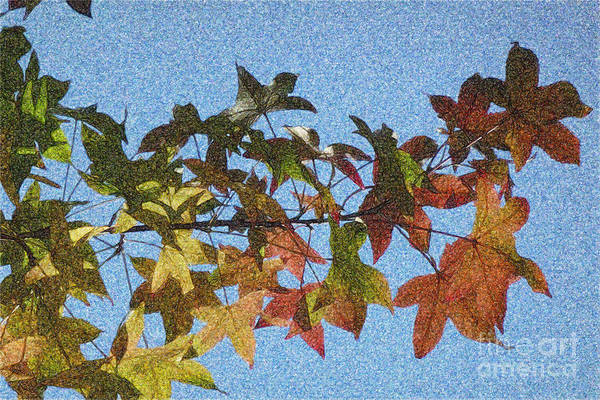 Photograph - Autumn Leaves 3 by Jean Bernard Roussilhe