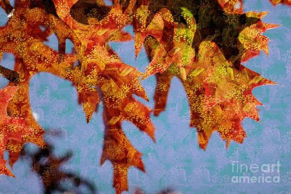 Photograph - Autumn Leaves 5 by Jean Bernard Roussilhe