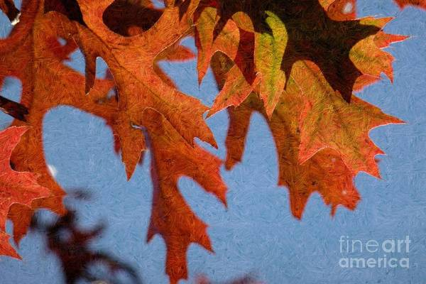 Photograph - Autumn Leaves 6 by Jean Bernard Roussilhe