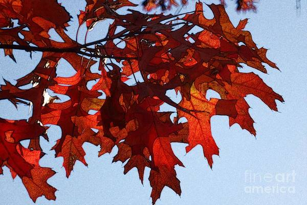 Photograph - Autumn Leaves 7 by Jean Bernard Roussilhe