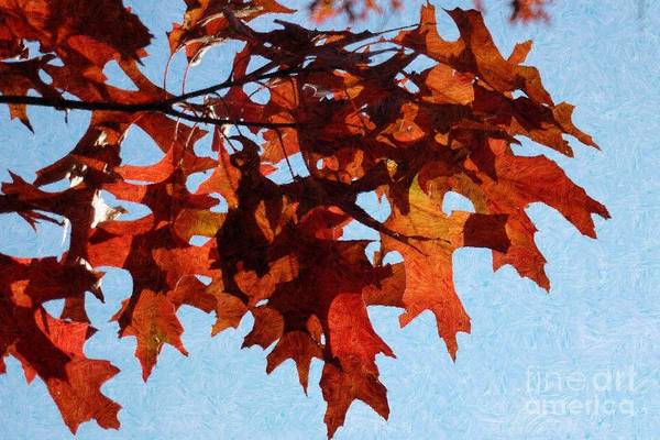 Photograph - Autumn Leaves 8 by Jean Bernard Roussilhe