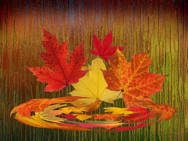 Photograph - Autumn Leaves Abstract by Gill Billington