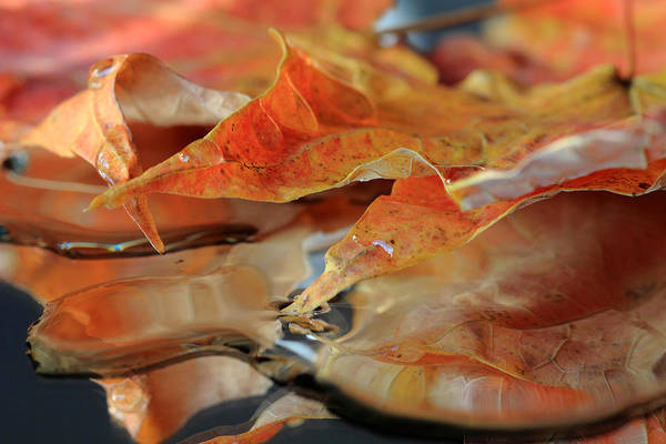 Photograph - Autumn Leaves After The Rain by Angela Murdock