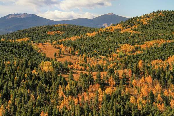Photograph - Autumn Leaves And Evergreens In Colorado by Dan Sproul