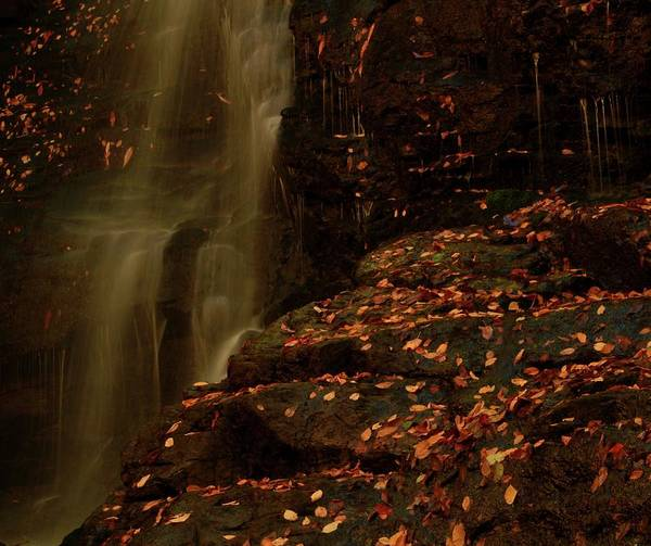 Photograph - Autumn Leaves At Soco Falls by Dan Sproul