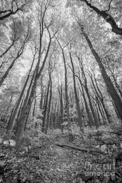 Skyline Trail Photograph - Autumn Leaves Bw by Michael Ver Sprill