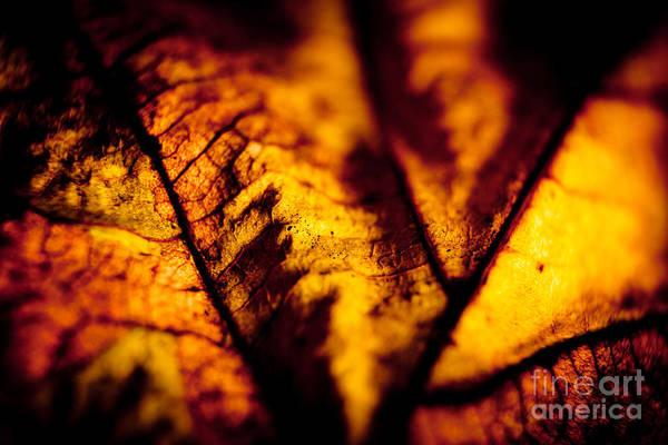 Photograph - Autumn Leaves Closeup by Raimond Klavins