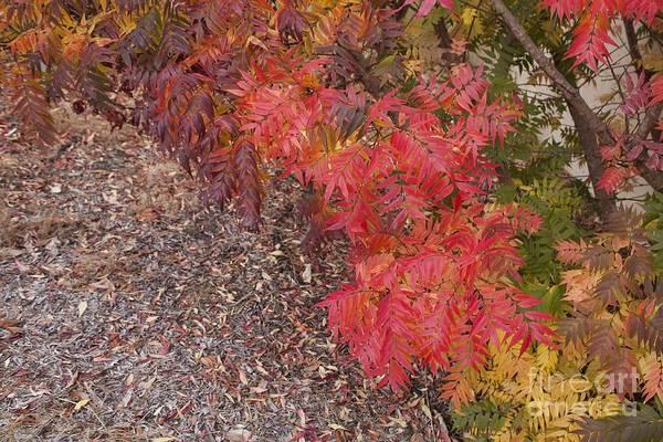 Photograph - Autumn Leaves by Elaine Teague