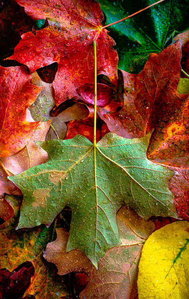 Wall Art - Photograph - Autumn Leaves by Greg Waters