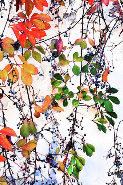 Moberly Photograph - Autumn Leaves by Guy Moberly