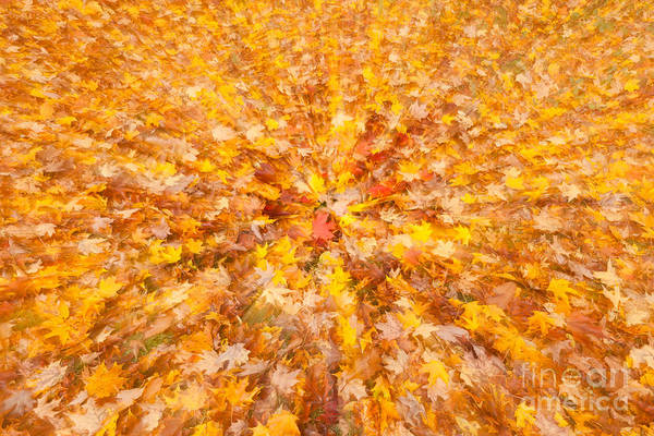 Photograph - Autumn Leaves II by Clarence Holmes