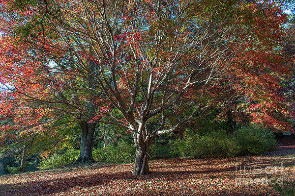 Photograph - Autumn Leaves In Asheville Nc by Dale Powell