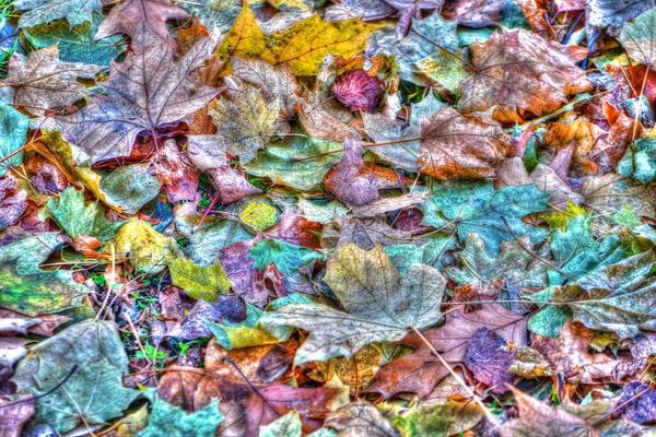 Wall Art - Photograph - Autumn Leaves In Central Park by Randy Aveille