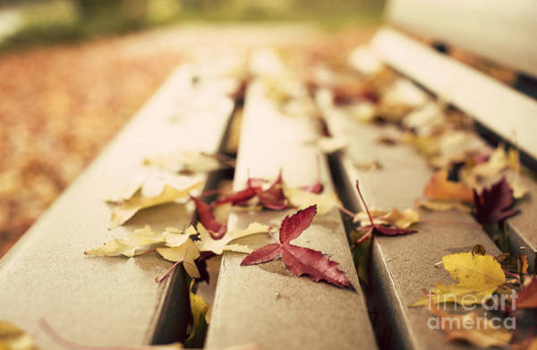 Wall Art - Photograph - Autumn Leaves  by Juli Scalzi