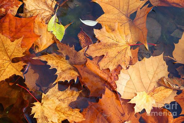 Photograph - Autumn Leaves by Karen Adams