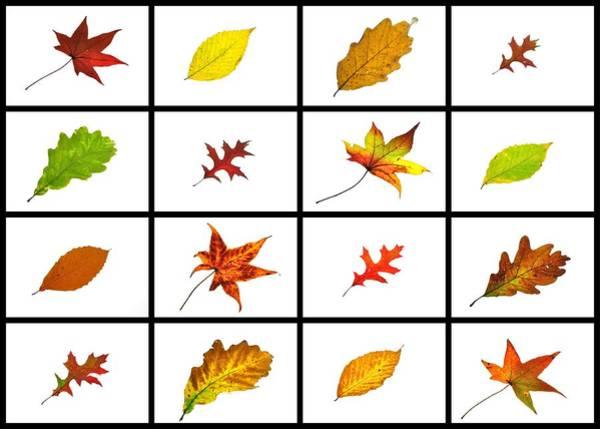 Photograph - Autumn Leaves Lightbox 1 by Mark Fuller