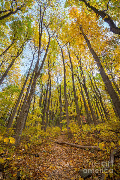 Skyline Trail Photograph - Autumn Leaves by Michael Ver Sprill